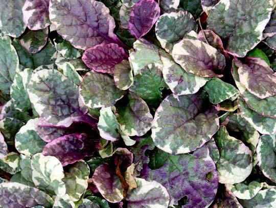 Un quadrato di giardino vivaio piante insolite forum for Piante tappezzanti perenni