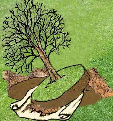 A di arbusto o piccolo albero come spostarlo - Alberi da giardino piccolo ...