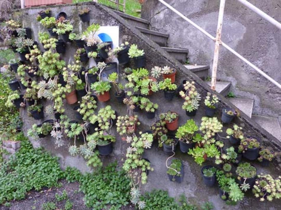 Piccolo giardino in verticale di piante grasse - Piante x giardino ...