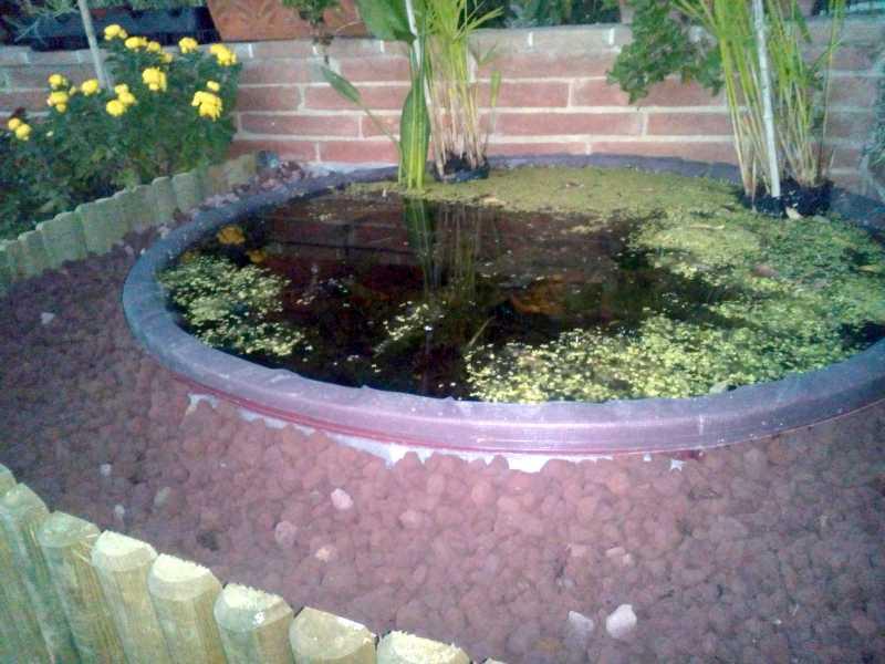 Un quadrato di giardino forum di giardinaggio un - Piccoli laghetti da giardino ...