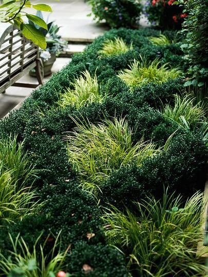 Great adatto per valorizzare disegni e giardini formali e for Disegnare giardini