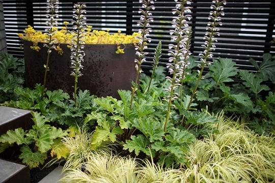 Idee Per Il Giardino Piccolo : Acorus gramineus l erba ornamentale sempreverde da e idee