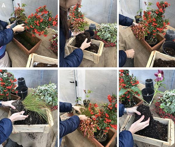 Composizione in vaso di piante invernali sempreverdi for Piante da esterno in vaso