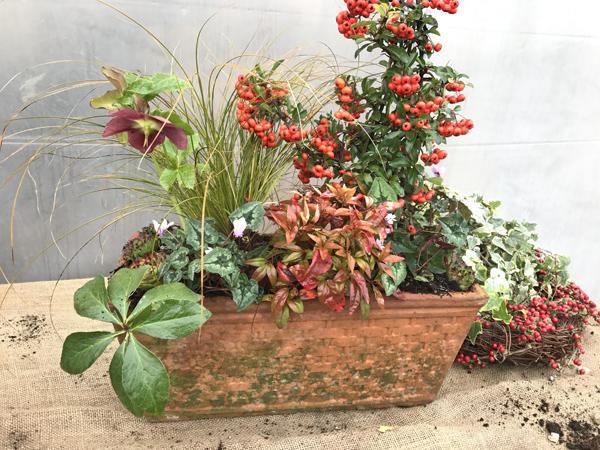 Composizione in vaso di piante invernali sempreverdi - Piante da vaso per esterno sempreverdi ...