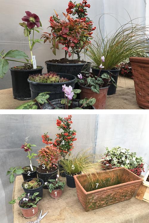 Composizione in vaso di piante invernali sempreverdi - Composizione giardino ...
