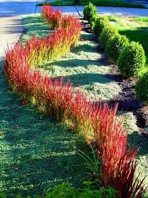 siepi colorate e bordi di graminacee ornamentali