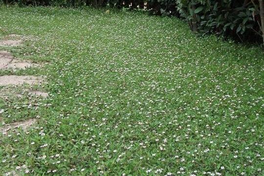 Q di... Qualità del terreno: migliorare la fertilità e la gestione del suolo ...