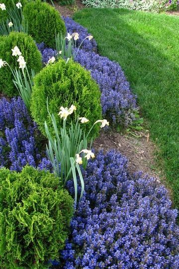 Q di qualit del terreno migliorare la fertilit e la for Piante ornamentali perenni