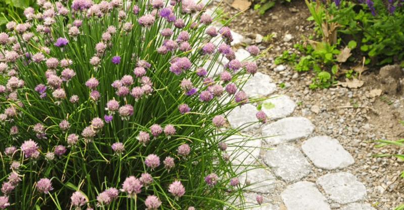 vialetti-camminamenti-sentieri-giardino-idee_00001