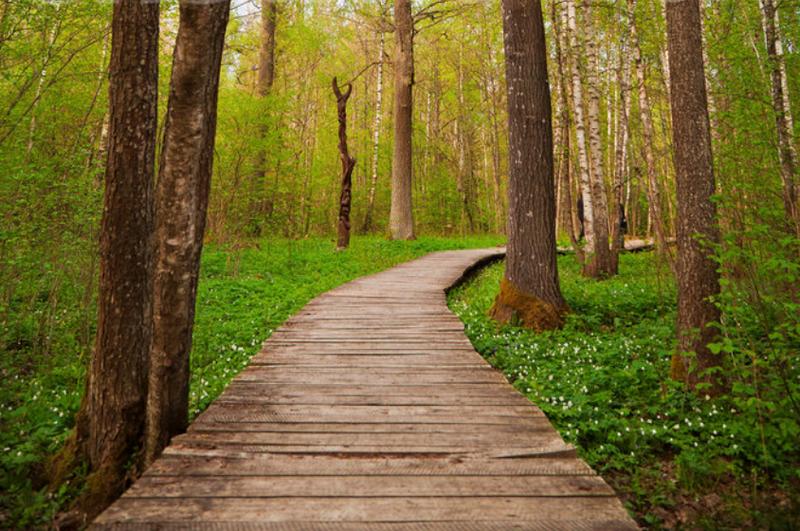 vialetti-camminamenti-sentieri-giardino-idee_00022