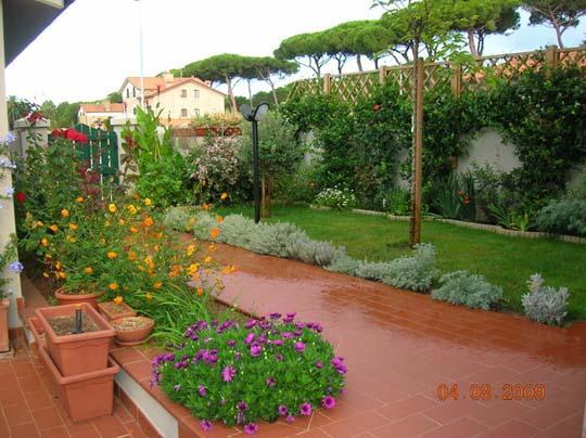 La siepe rampicante sempreverde di hardenbergia violacea - Sempreverde da giardino ...