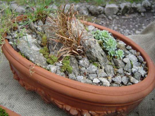 Giardino in miniatura in un piatto coltivare e viaggiare - Idee giardino senza erba ...