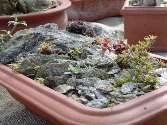 Giardino in miniatura in un piatto coltivare e viaggiare per giardini rocciosi senza muoversi - Giardino in miniatura ...