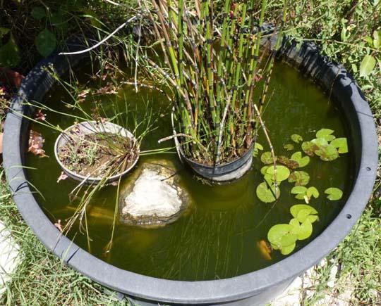 Vasca Da Giardino In Pvc.L Ecosistema Acquatico Un Grazioso Laghetto Stagno Da Giardino A