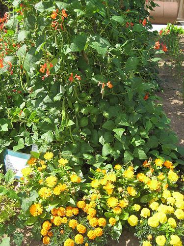 Ebook gratis compagne d 39 impianto piante belle e piante for Piante belle da giardino
