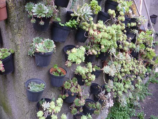Piccolo giardino in verticale di piante grasse - Piante da parete ...