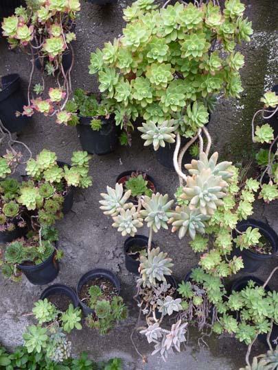 Piccolo giardino in verticale di piante grasse