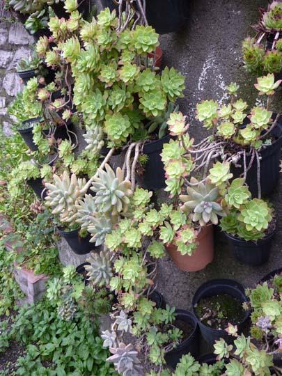 Piccolo giardino in verticale di piante grasse - Giardino roccioso piante grasse ...