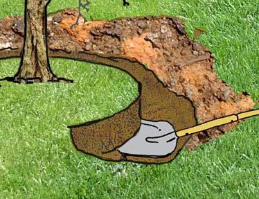 A di arbusto o piccolo albero come spostarlo - Alberi giardino piccolo ...