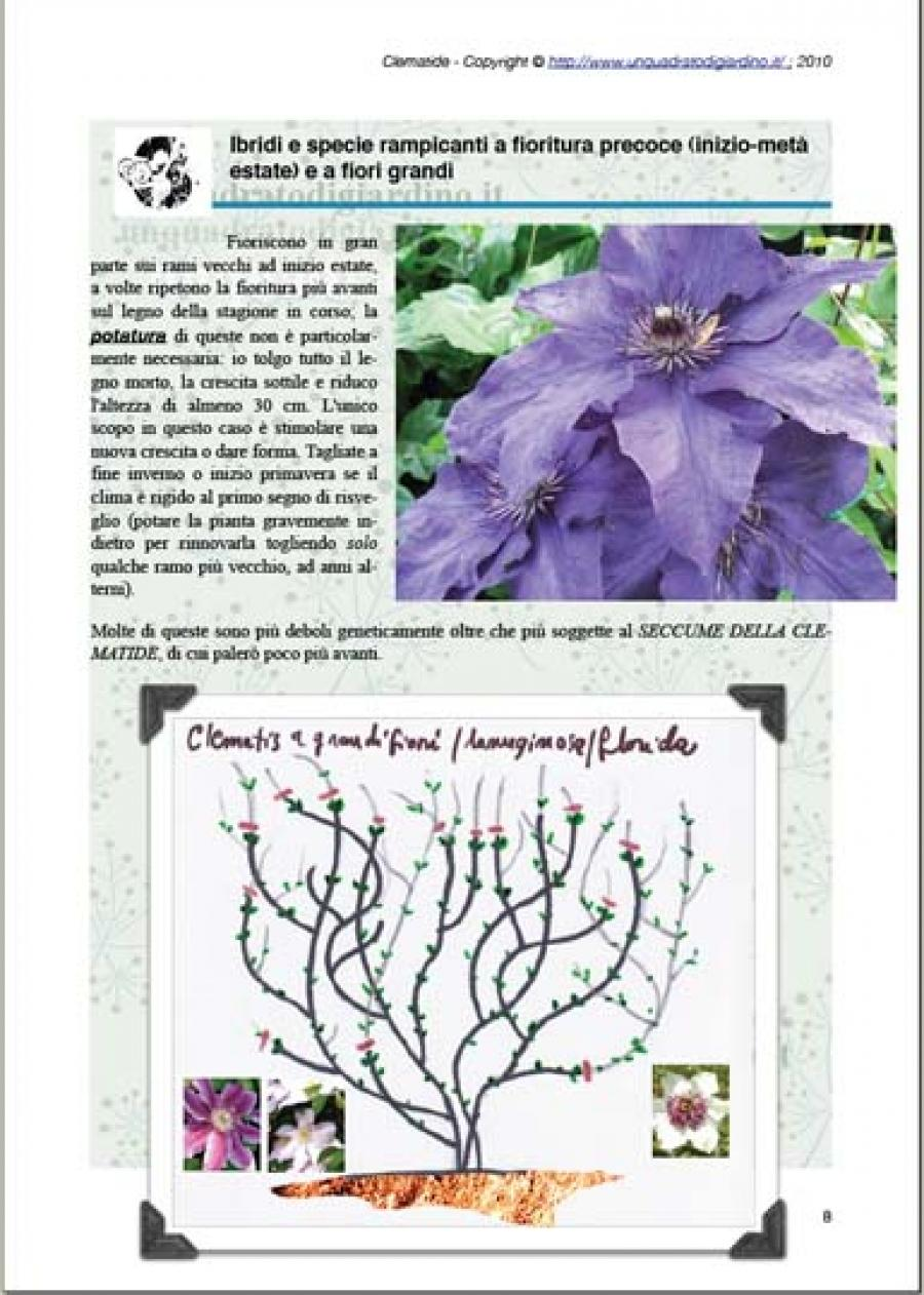 Clematis Resistenti Al Freddo ebook gratis: clematide (clematis) rampicante, ma non solo