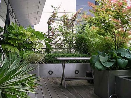 V di vaso come coltivare gli arbusti ornamentali for Sempreverdi da balcone
