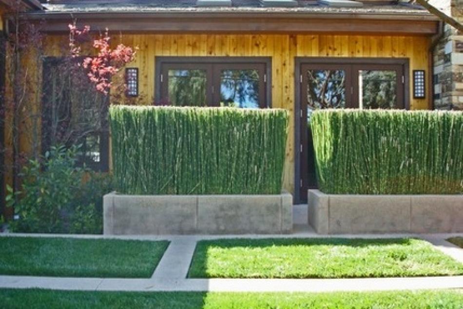 s di? siepe e sempreverdi: piante da vaso e per piccoli giardini - Piante Sempreverdi Da Vaso Balcone