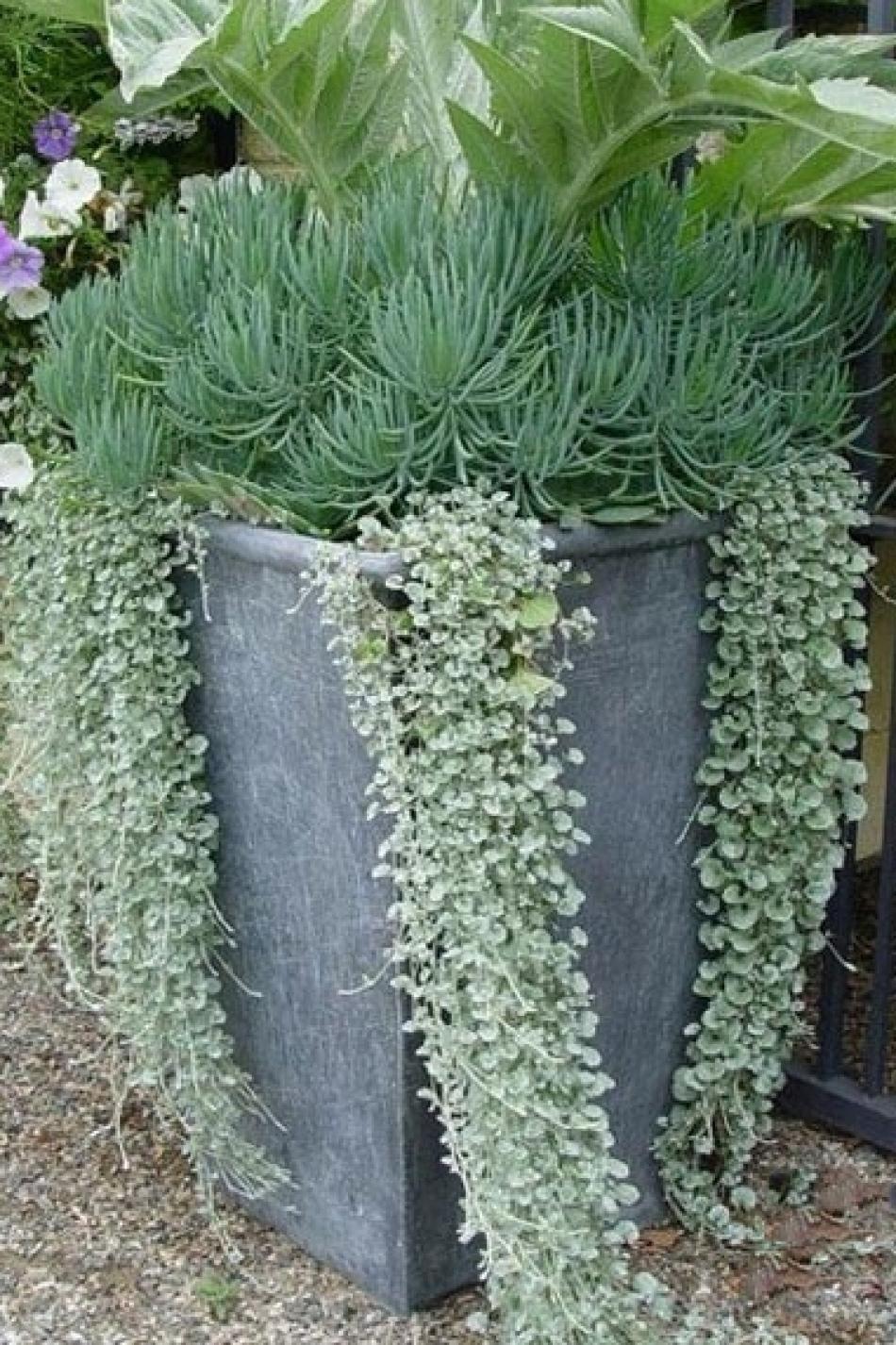 Un quadrato di giardino   vivaio piante insolite   forum di ...