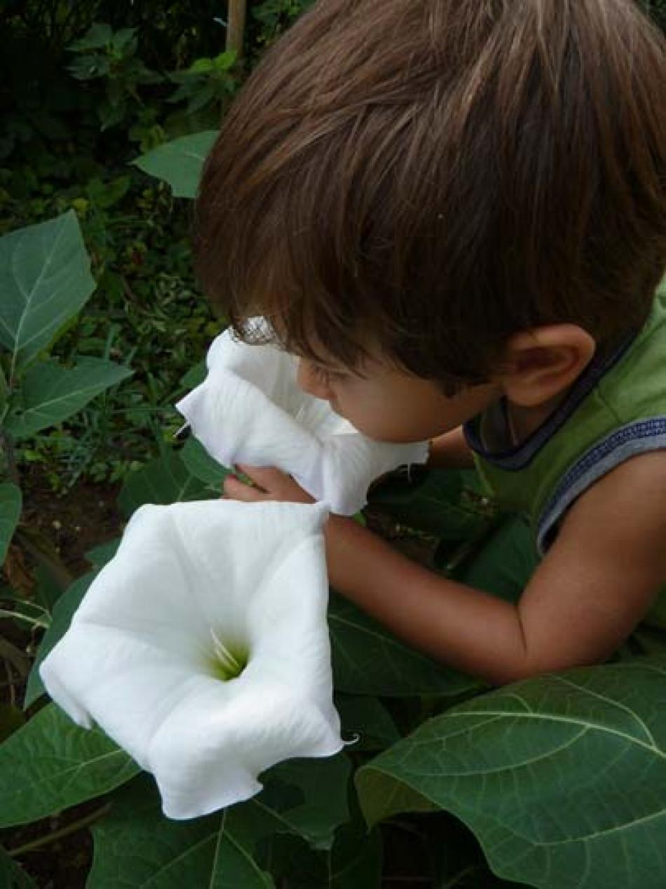 P di...profumato:      fiori e piante profumati   (  per vasi ...