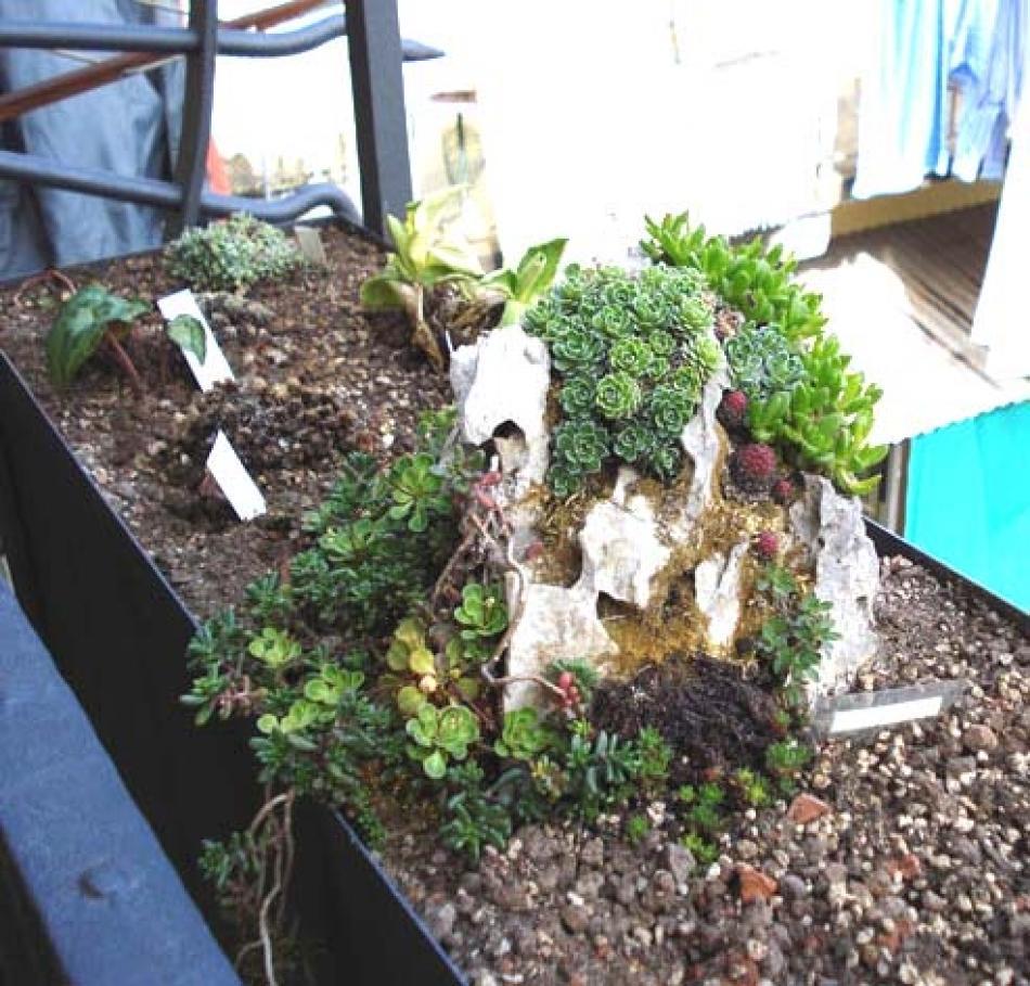 Le jardin suspendu ovvero come trasformare un balcone in - Il giardino roccioso ...