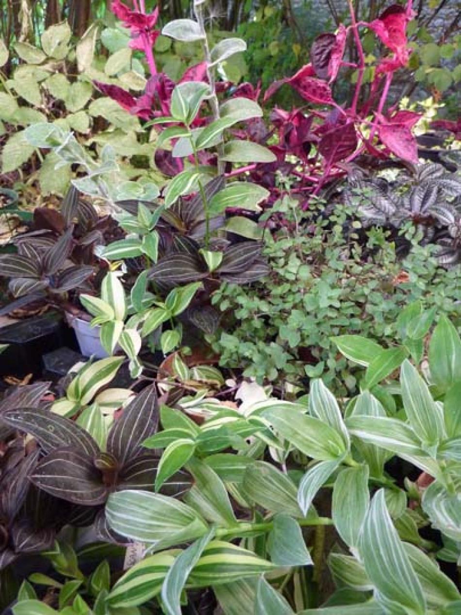 Novità dal mondo dei giardini e del giardinaggio