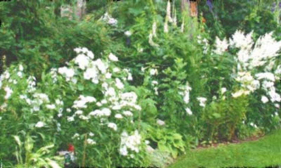 Fiori Bianchi Giardino.Giardini Monocromatici Che Di Monocromatico Non Hanno Nulla O