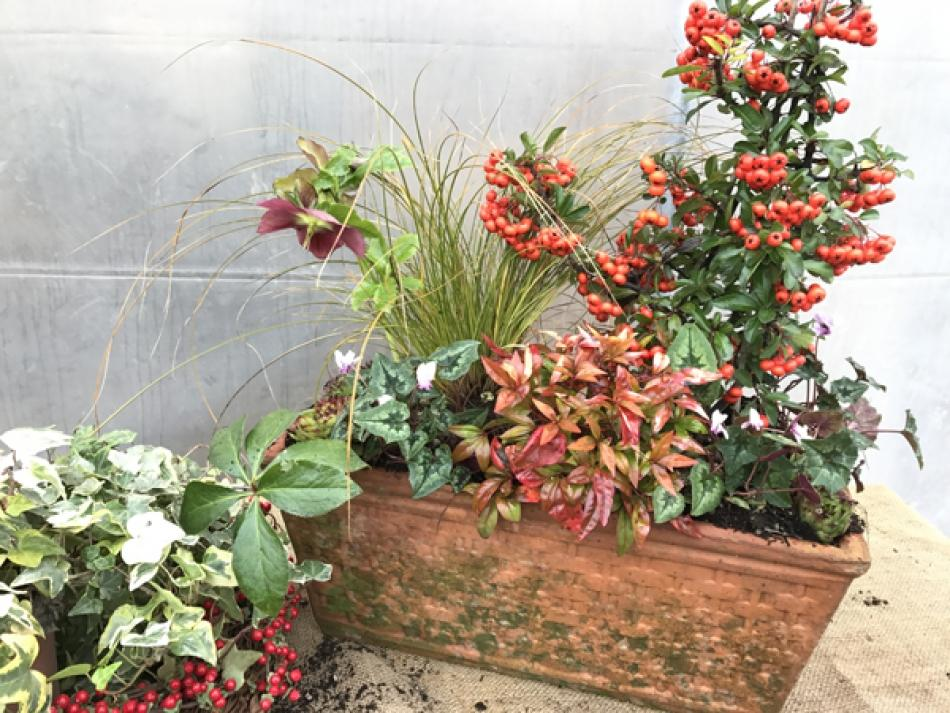 composizione in vaso di piante invernali sempreverdi