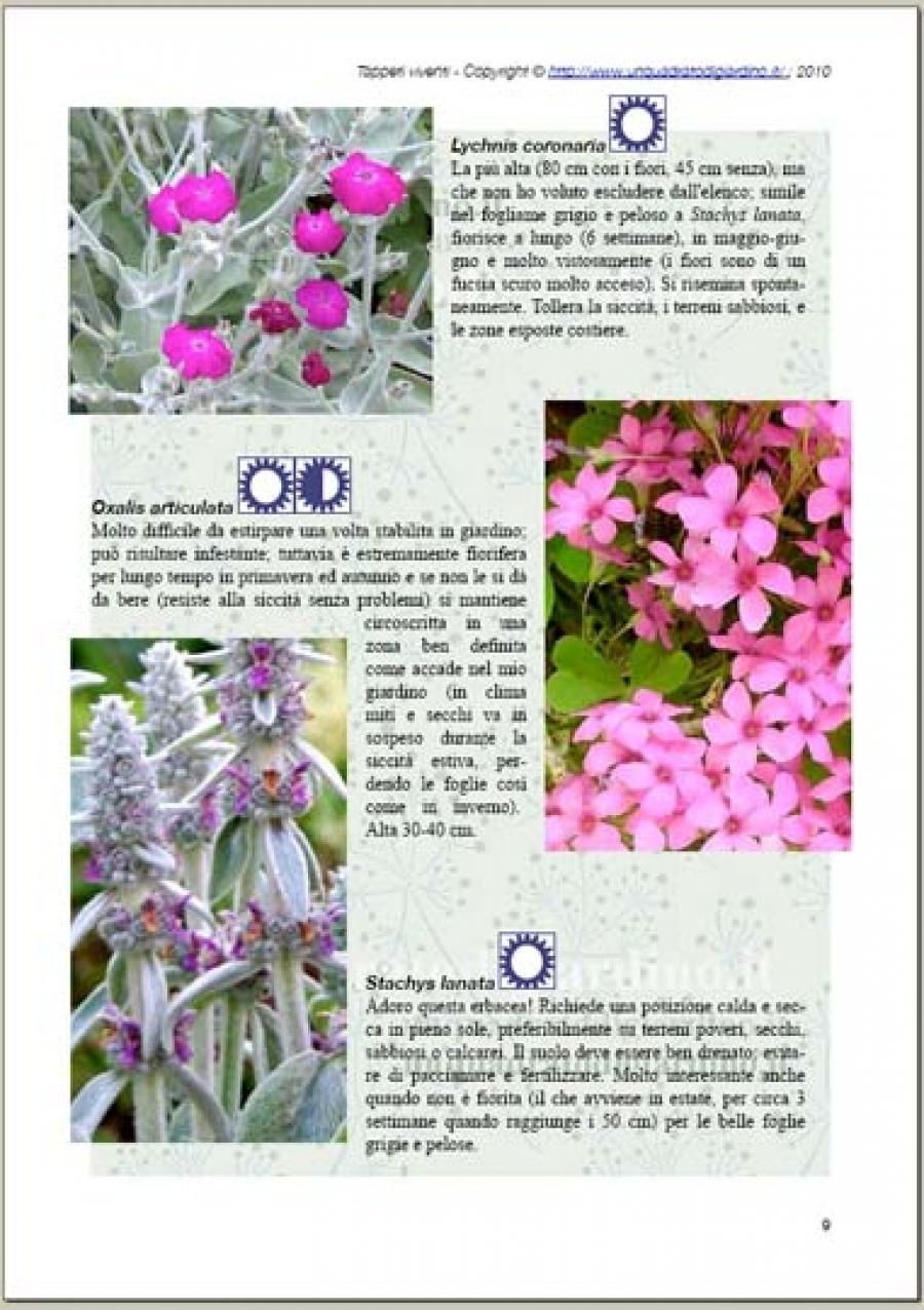 Fiori Tappezzanti Per Aiuole piante perenni tappezzanti
