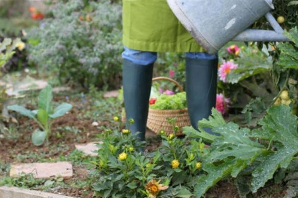 g di giardino e giardinaggio cosa sono