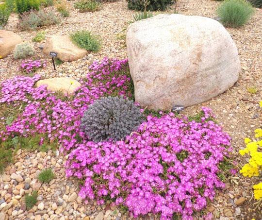 piante fiorite resistenti alla siccit ed al freddo un