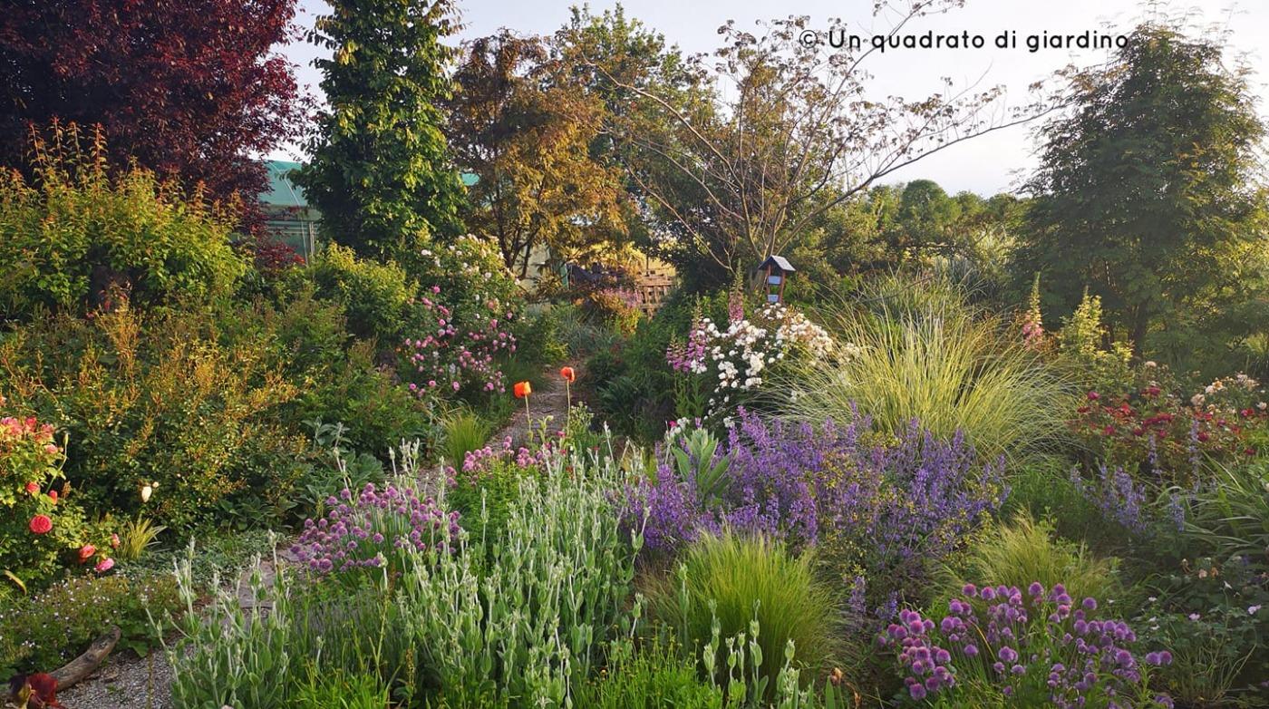 un-quadrato-di-giardino_2020-08-03.jpg