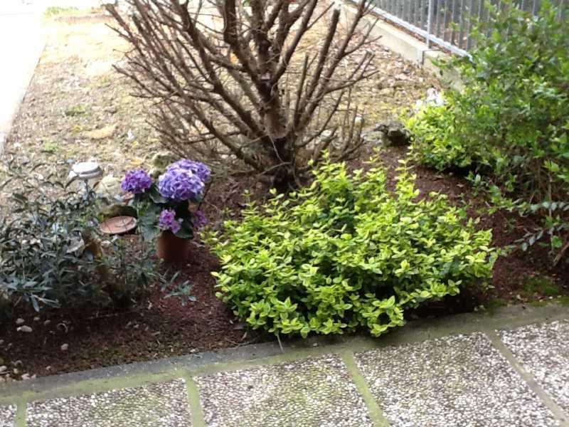 Progetto piccolo giardino in ombra piante da ombra e - Piante da giardino ombra ...