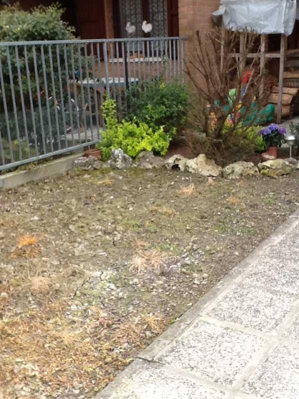Progetto piccolo giardino in ombra piante da ombra e - Progetto piccolo giardino ...