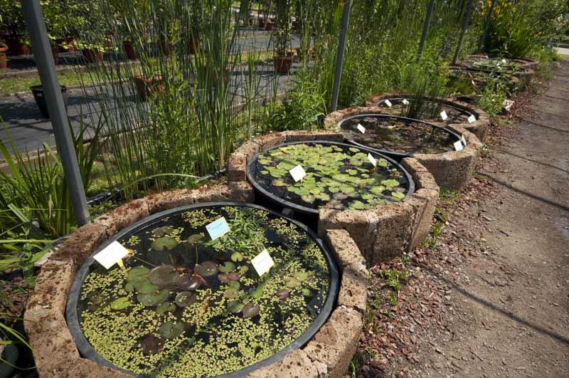mini pond mini laghetti e tartarughe acquatiche emys