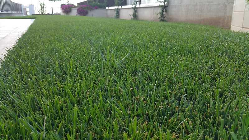 Prato nuovo problemi aiuto un quadrato di giardino - Quando seminare erba giardino ...