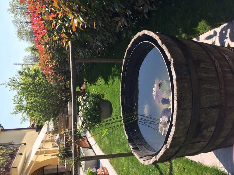 Tinozza e laghetto un quadrato di giardino for Piante da stagno